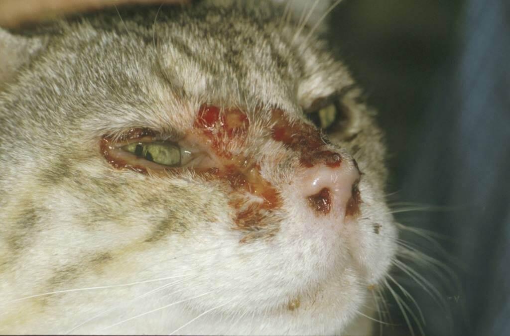 Trumpai Apie Kačių Ir Unų Ligas Nauceris